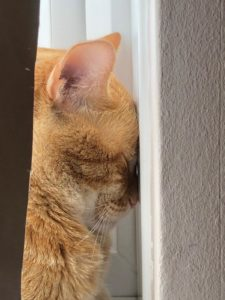 Cat with its head pressed against a wall