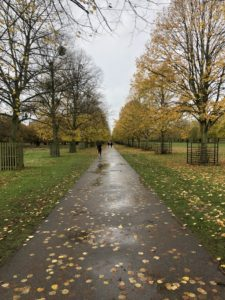 Bushy Park with trees along a rainy path